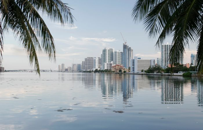 a photo looking at miami beach from a distance over the water with two palm trees framing the photo in the top left and right corners
